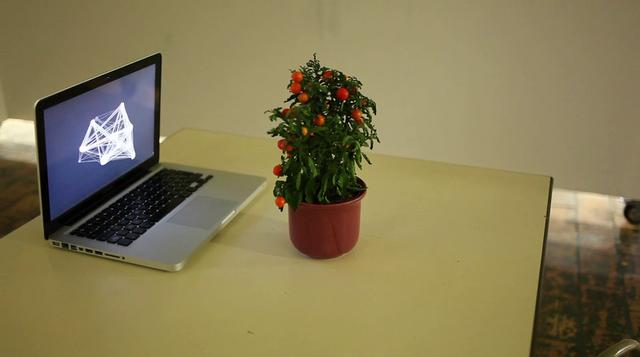 Plant Scan – Plant Generative Visualization